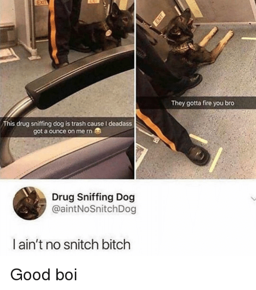 ounce: They gotta fire you bro  This drug sniffing dog is trash cause I deadass  got a ounce on me rn  Drug Sniffing Dog  @aintNoSnitchDog  ain't no snitch bitch Good boi