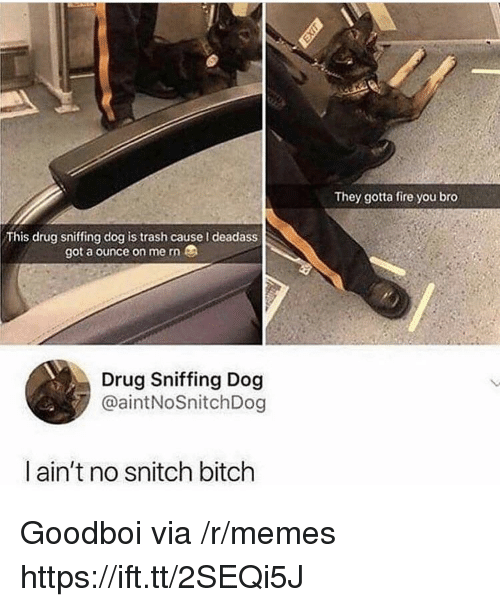 ounce: They gotta fire you bro  This drug sniffing dog is trash cause I deadass  got a ounce on me rn  Drug Sniffing Dog  @aintNoSnitchDog  ain't no snitch bitch Goodboi via /r/memes https://ift.tt/2SEQi5J