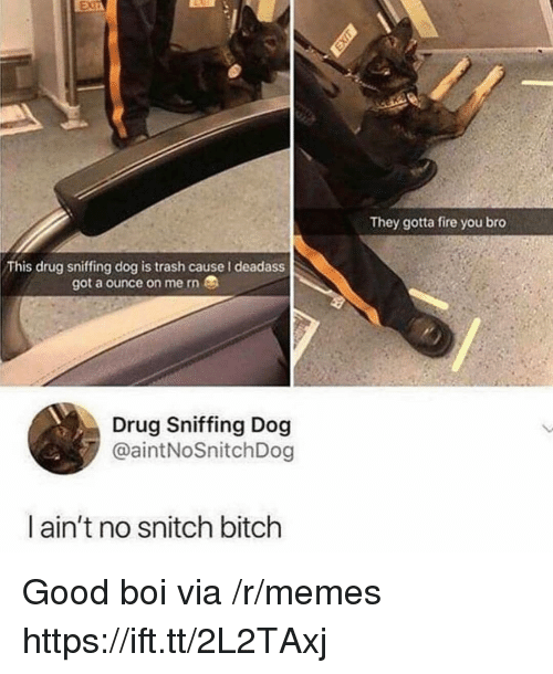 Bitch, Fire, and Memes: They gotta fire you bro  This drug sniffing dog is trash cause I deadass  got a ounce on me rn  Drug Sniffing Dog  @aintNoSnitchDog  ain't no snitch bitch Good boi via /r/memes https://ift.tt/2L2TAxj