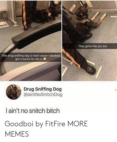 ounce: They gotta fire you bro  This drug sniffing dog is trash cause I deadass  got a ounce on me rn  Drug Sniffing Dog  @aintNoSnitchDog  ain't no snitch bitch Goodboi by FitFire MORE MEMES