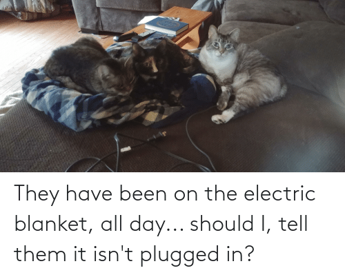 Aww Memes: They have been on the electric blanket, all day... should I, tell them it isn't plugged in?