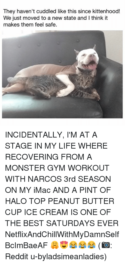 Gym, Halo, and Life: They haven't cuddled like this since kittenhood!  We just moved to a new state and I think it  makes them feel safe. INCIDENTALLY, I'M AT A STAGE IN MY LIFE WHERE RECOVERING FROM A MONSTER GYM WORKOUT WITH NARCOS 3rd SEASON ON MY iMac AND A PINT OF HALO TOP PEANUT BUTTER CUP ICE CREAM IS ONE OF THE BEST SATURDAYS EVER NetflixAndChillWithMyDamnSelf BcImBaeAF 🤗😍😂😂😂 (📷: Reddit u-byladsimeanladies)
