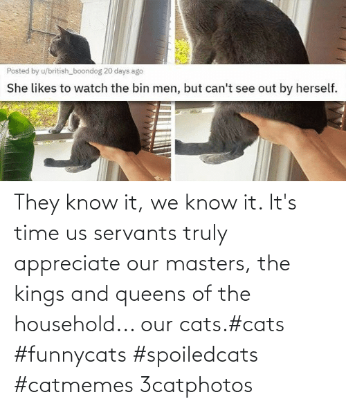 kings: They know it, we know it. It's time us servants truly appreciate our masters, the kings and queens of the household... our cats.#cats #funnycats #spoiledcats #catmemes 3catphotos
