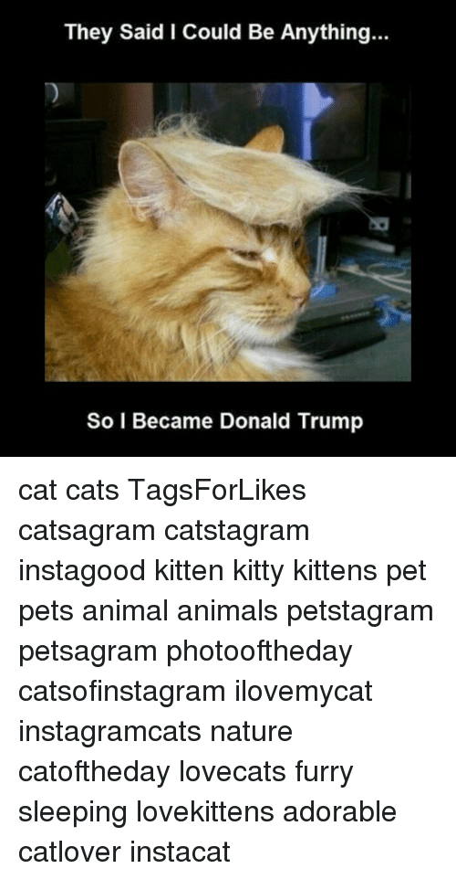 They Said I Could Be Anything So I Became Donald Trump Cat Cats