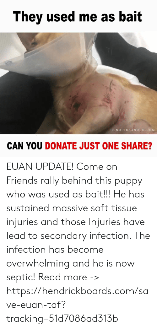 Friends, Memes, and Puppy: They used me as bait  HENDRICKAND CO.CO M  CAN YOU DONATE JUST ONE SHARE? EUAN UPDATE! Come on Friends rally behind this puppy who was used as bait!!!   He has sustained massive soft tissue injuries and those Injuries have lead to secondary infection. The infection has become overwhelming and he is now septic!   Read more -> https://hendrickboards.com/save-euan-taf?tracking=51d7086ad313b