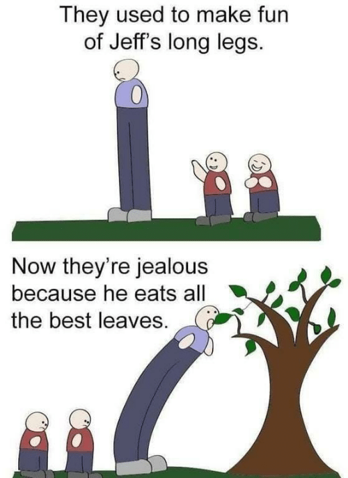 legs: They used to make fun  of Jeff's long legs.  Now they're jealous  because he eats all  the best leaves.