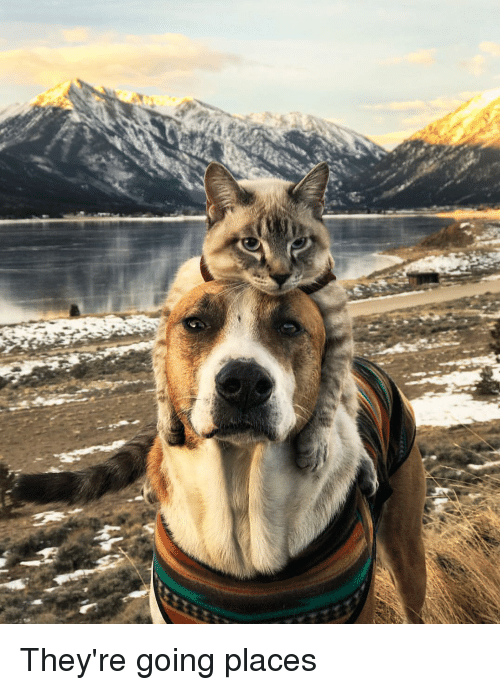 Doggo, Kitteh, and And: They're going places