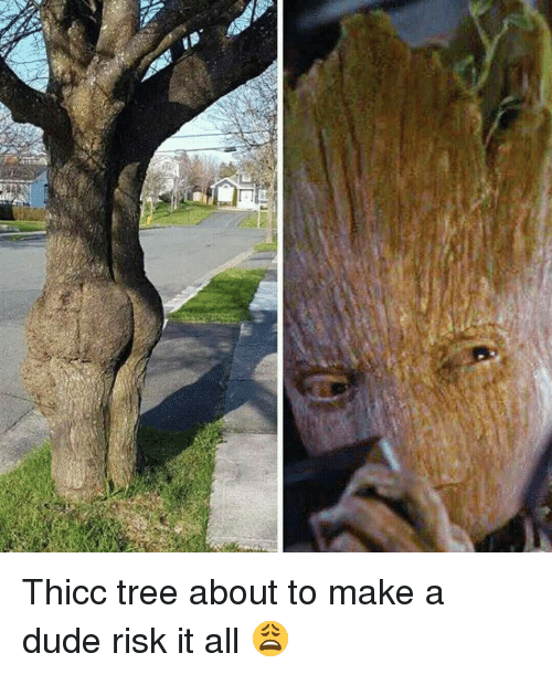 Dude, Tree, and Dank Memes: Thicc tree about to make a dude risk it all 😩