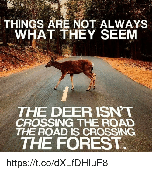 Deer, Memes, and The Road: THINGS ARE NOT ALWAYS  WHAT THEY SEEM  THE DEER ISNT  CROSSING THE ROAD  THE ROAD IS CROSSING  THE FOREST https://t.co/dXLfDHIuF8