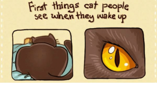 Memes, 🤖, and Cat People: things cat people  see when they wake up