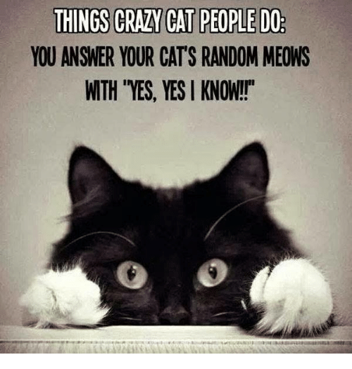 """Memes, 🤖, and Tes: THINGS CRAA CAT PEOPLE DO  YOU ANSWER YOUR CATS RANDOM MEOWS  WTH TES, YES I KNOW!"""""""