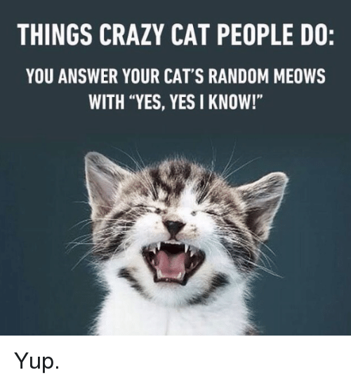 "Cats, Crazy, and Memes: THINGS CRAZY CAT PEOPLE DO:  YOU ANSWER YOUR CAT'S RANDOM MEOWS  WITH ""YES, YES I KNOW!"" Yup."