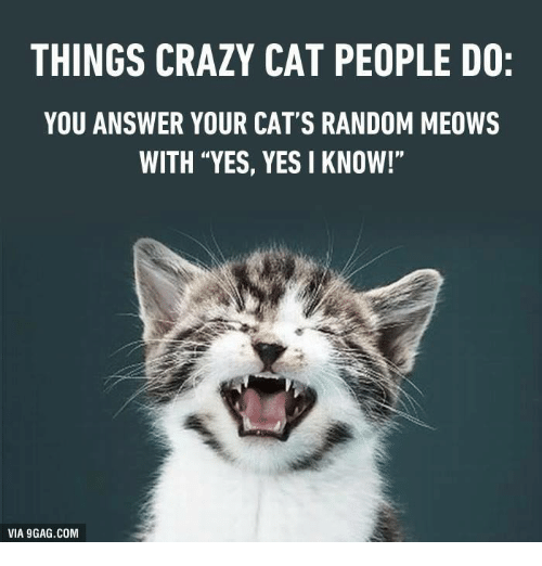 "crazy cats: THINGS CRAZY CAT PEOPLE DO:  YOU ANSWER YOUR CAT'S RANDOM MEOWS  WITH ""YES, YES I KNOW!""  VIA 9GAG.COM"