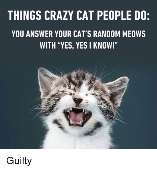 "crazy cats: THINGS CRAZY CAT PEOPLE DO:  YOU ANSWER YOUR CAT'S RANDOM MEOWS  WITH ""YES, YES I KNOW!"" Guilty"