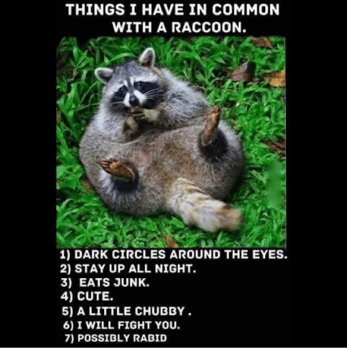 Stayed Up All Night: THINGS I HAVE IN COMMON  WITH A RACCOON.  1) DARK CIRCLES AROUND THE EYES.  2) STAY UP ALL NIGHT.  3) EATS JUNK.  4) CUTE.  5) A LITTLE CHUBBY  6) I WILL FIGHT YOU.  7) POSSIBLY RABID