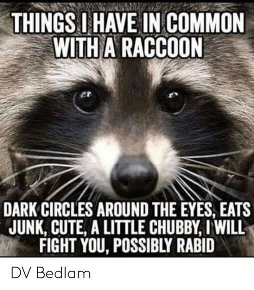 dark circles: THINGS IHAVE IN COMMON  WITH A RACCOON  DARK CIRCLES AROUND THE EYES, EATS  JUNK, CUTE, A LITTLE CHUBBY, I WILL  FIGHT YOU, POSSIBLY RABID DV Bedlam