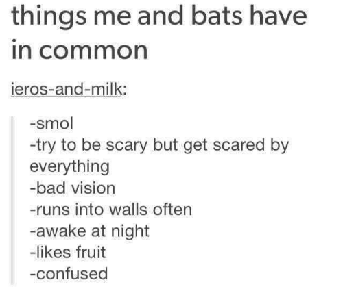 Bad, Confused, and Vision: things me and bats have  n common  ieros-and-milk:  -smol  -try to be scary but get scared by  everything  -bad vision  -runs into walls often  -awake at night  -likes fruit  -confused