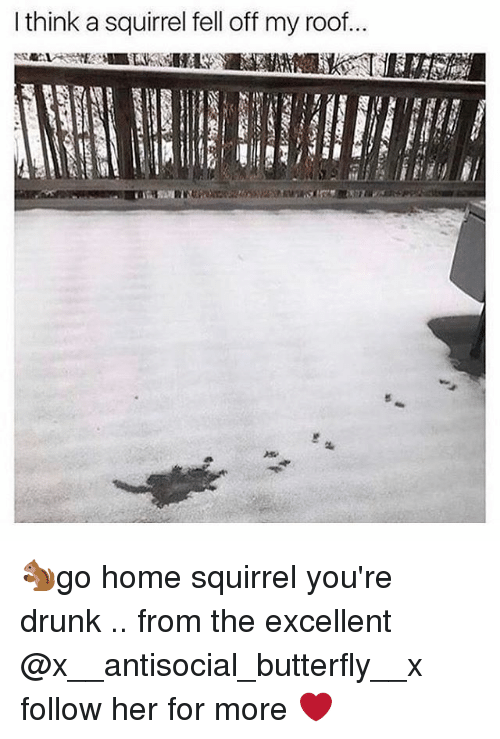 Antisociable: think a squirrel fell off my roof... 🐿go home squirrel you're drunk .. from the excellent @x__antisocial_butterfly__x follow her for more ❤️
