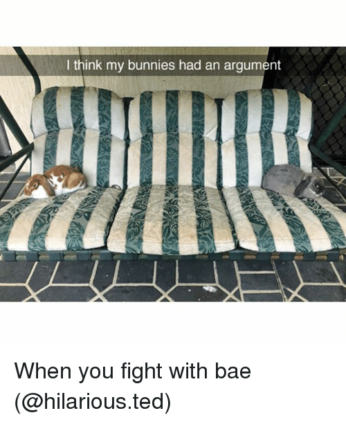 Bae, Bunnies, and Funny: think my bunnies had an argument When you fight with bae (@hilarious.ted)