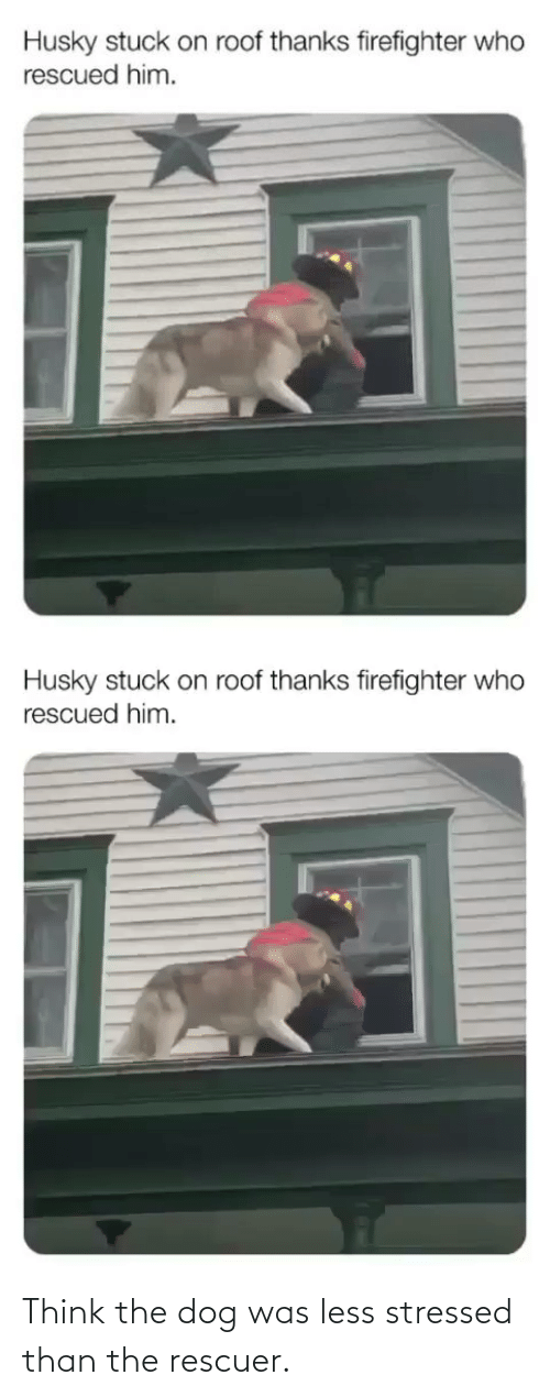 stressed: Think the dog was less stressed than the rescuer.