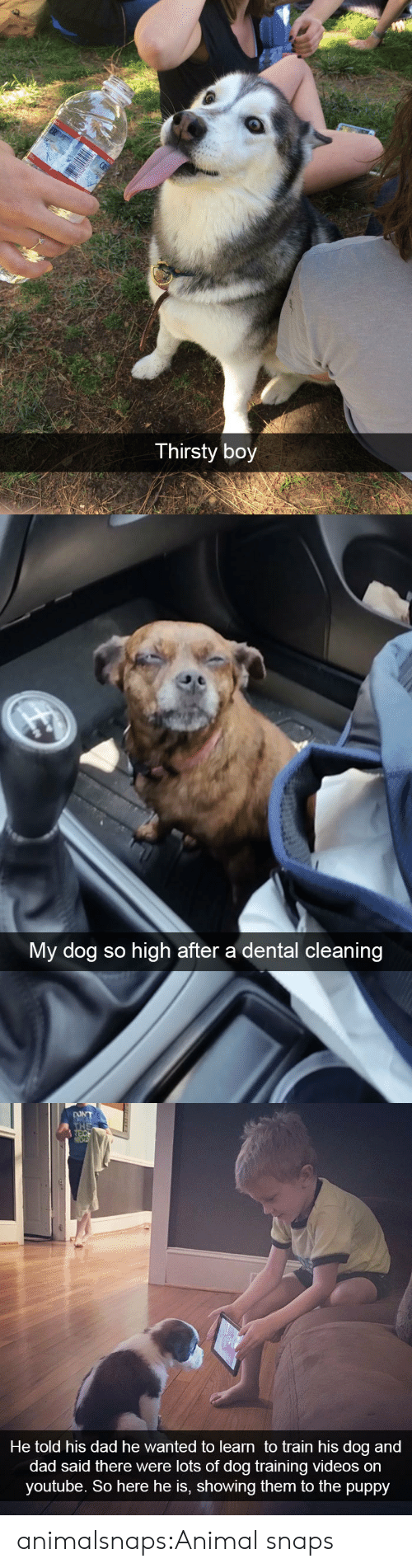 Dad, Target, and Thirsty: Thirsty boy   My dog so high after a dental cleaning   DONT  THE  REC  He told his dad he wanted to learn to train his dog and  dad said there were lots of dog training videos on  youtube. So here he is, showing them to the puppy animalsnaps:Animal snaps