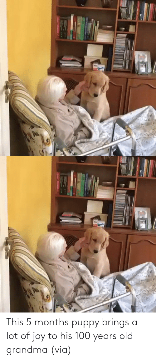 Old: This 5 months puppy brings a lot of joy to his 100 years old grandma (via)