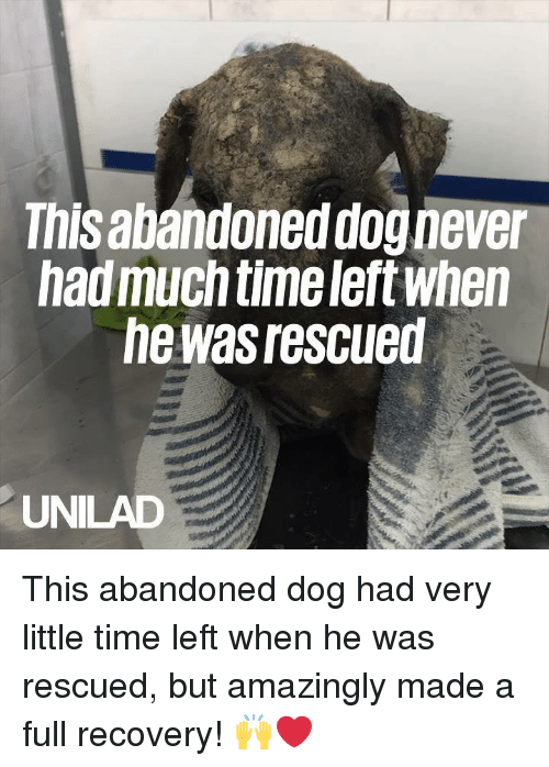 Dank, Time, and Never: This abandoned dog never  hadmuch time left when  he was rescued  UNILAD This abandoned dog had very little time left when he was rescued, but amazingly made a full recovery! 🙌❤️️