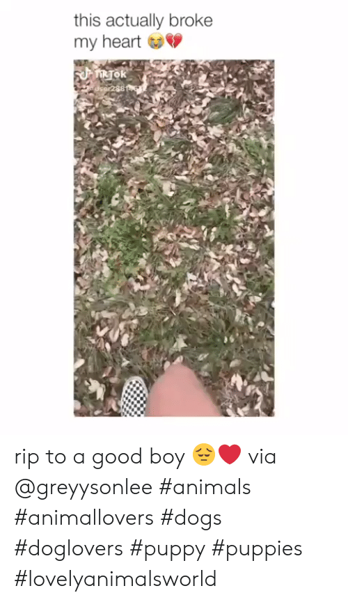 Animals, Dogs, and Puppies: this actually broke  my heart rip to a good boy 😔❤️ via @greyysonlee #animals #animallovers #dogs #doglovers #puppy #puppies #lovelyanimalsworld