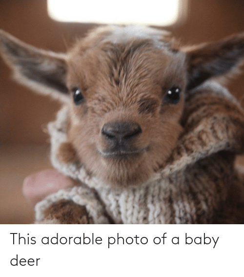 Aww Memes: This adorable photo of a baby deer