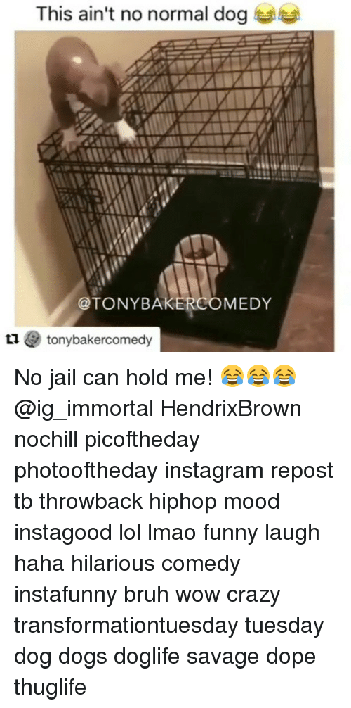 Lmao Funny: This ain't no normal dog  @TONYBAKERCOMEDY  1 tonybakercomedy No jail can hold me! 😂😂😂 @ig_immortal HendrixBrown nochill picoftheday photooftheday instagram repost tb throwback hiphop mood instagood lol lmao funny laugh haha hilarious comedy instafunny bruh wow crazy transformationtuesday tuesday dog dogs doglife savage dope thuglife