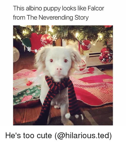 Cute, Funny, and Ted: This albino puppy looks like Falcor  from The Neverending Story He's too cute (@hilarious.ted)
