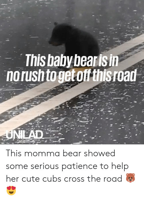 Cute, Dank, and Bear: This baby bearis in  norush togeto thisroad This momma bear showed some serious patience to help her cute cubs cross the road 🐻😍