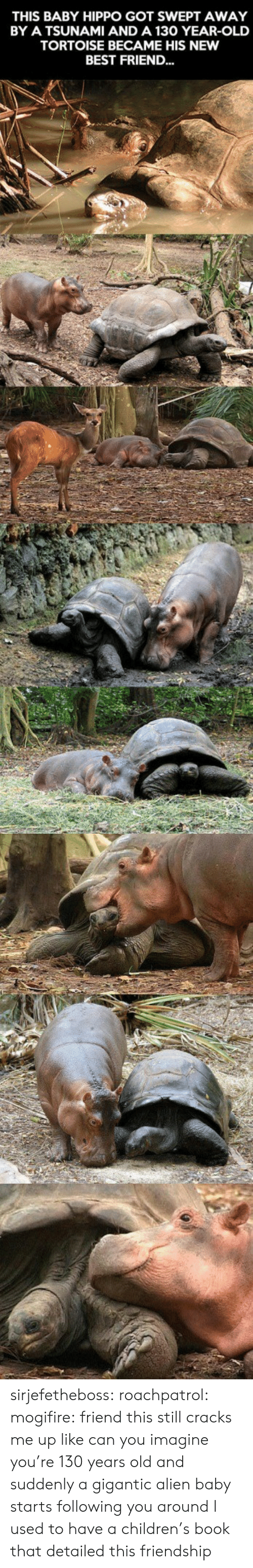 Baby Hippo: THIS BABY HIPPO GOT SWEPT AWAY  BY A TSUNAMI AND A 130 YEAR-OLD  TORTOISE BECAME HIS NEW  BEST FRIEND... sirjefetheboss:  roachpatrol: mogifire: friend this still cracks me up like can you imagine you're 130 years old and suddenly a gigantic alien baby starts following you around  I used to have a children's book that detailed this friendship