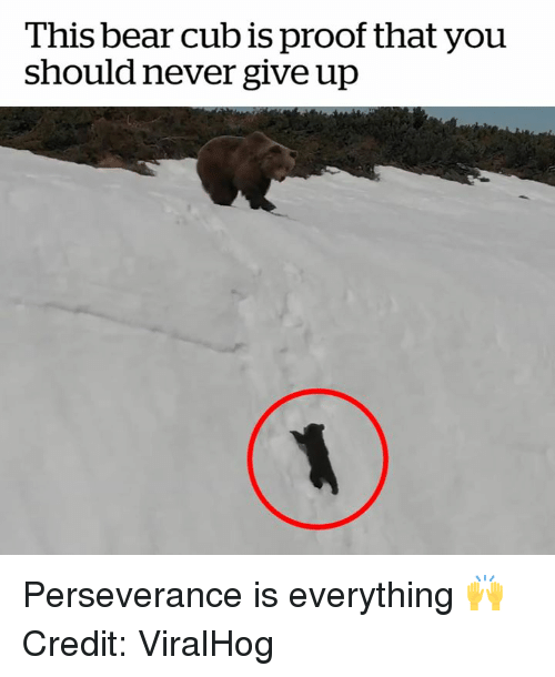Perseverance: This bear cub is proof that you  should never give up Perseverance is everything 🙌  Credit: ViralHog