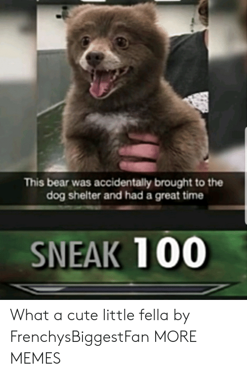 Fella: This bear was accidentally brought to the  dog shelter and had a great time  SNEAK 100 What a cute little fella by FrenchysBiggestFan MORE MEMES