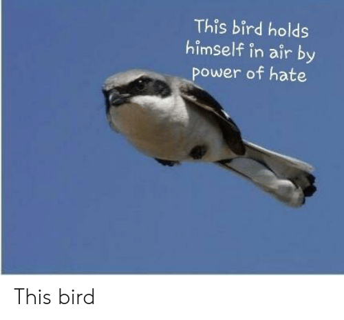 Power, Air, and This: This bird holds  himself in air by  power of hate This bird