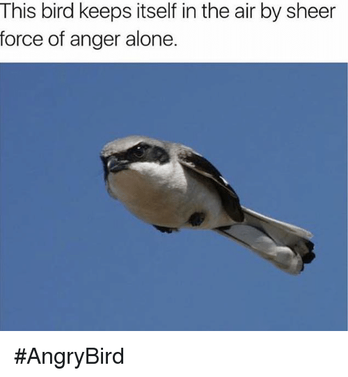 Angrybirds: This bird keeps itself in the air by sheer  force of anger alone. #AngryBird