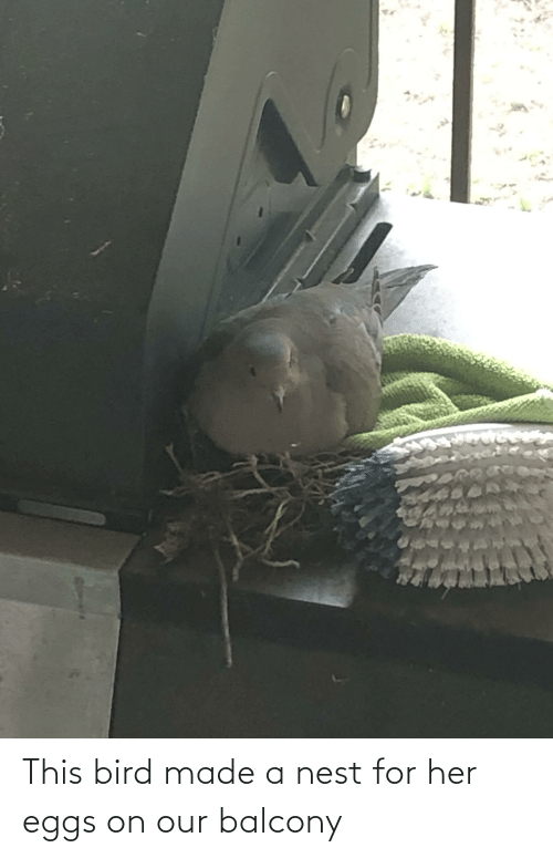 Nest: This bird made a nest for her eggs on our balcony
