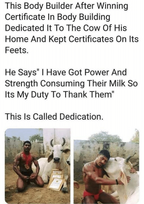 "feets: This Body Builder After Winning  Certificate In Body Building  Dedicated It To The Cow Of His  Home And Kept Certificates On Its  Feets.  He Says' I Have Got Power And  Strength Consuming Their Milk So  Its My Duty To Thank Them""  This Is Called Dedication."