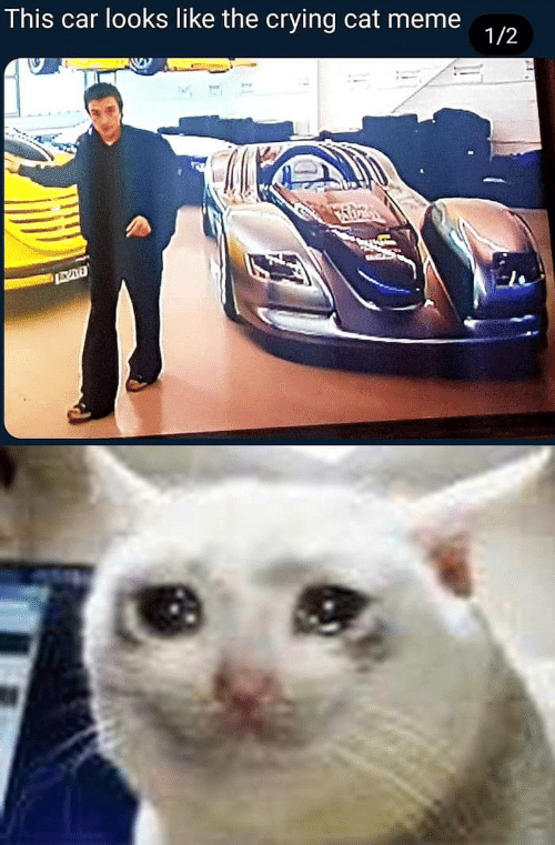 cat meme: This car looks like the crying cat meme  1/2