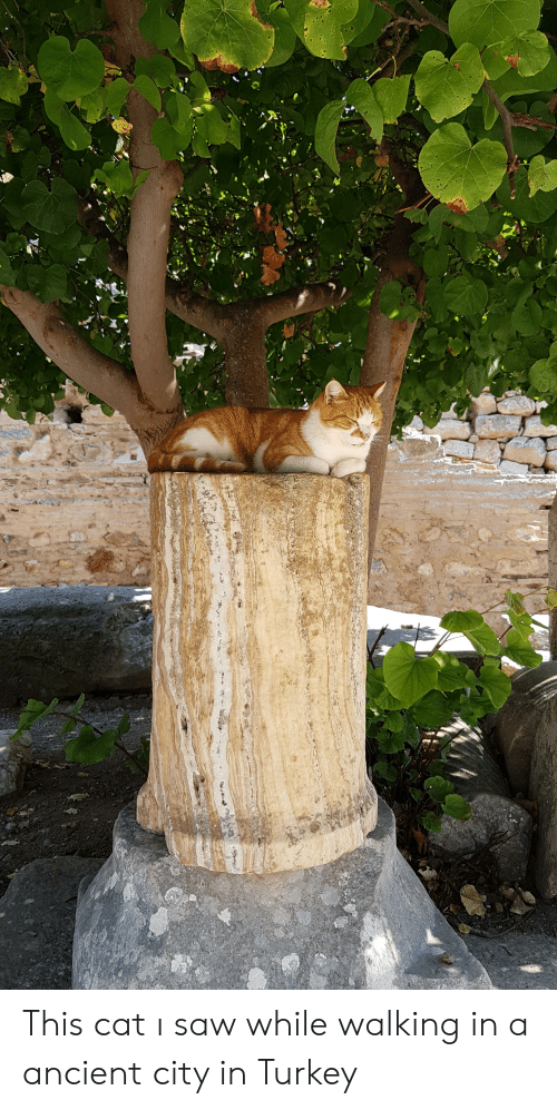 Saw, Turkey, and Ancient: This cat ı saw while walking in a ancient city in Turkey