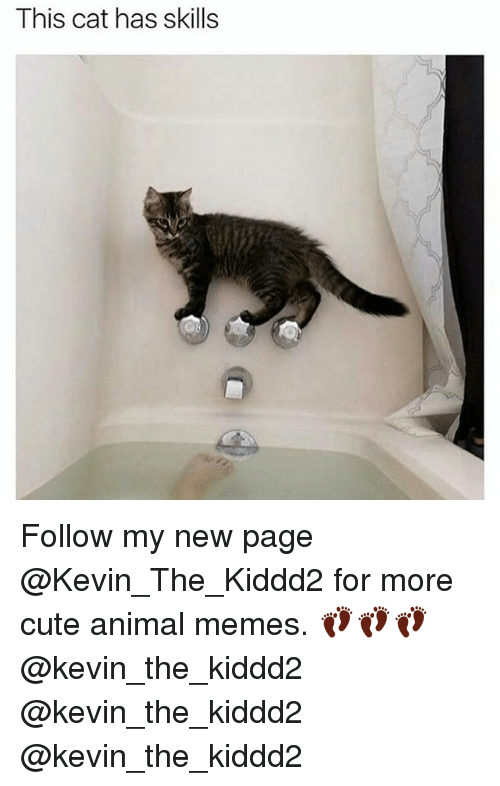 Cute, Memes, and Animal: This cat has skills Follow my new page @Kevin_The_Kiddd2 for more cute animal memes. 👣👣👣@kevin_the_kiddd2 @kevin_the_kiddd2 @kevin_the_kiddd2