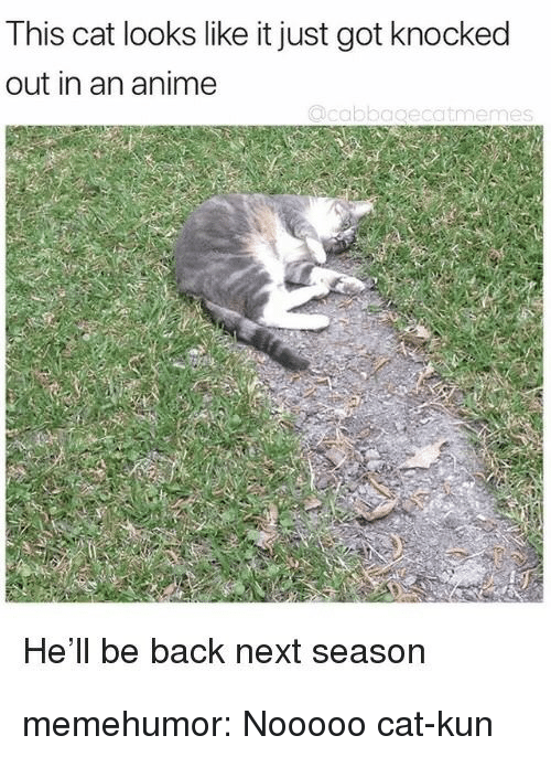 Anime, Tumblr, and Blog: This cat looks like it just got knocked  out in an anime  He'll be back next season memehumor:  Nooooo cat-kun