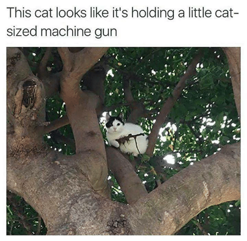 Machine Gun: This cat looks like it's holding a little cat-  sized machine gun