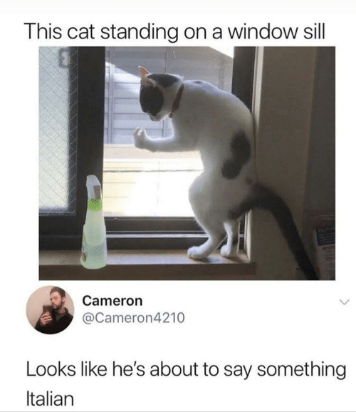 Cat, Cameron, and Window: This cat standing on a window sill  Cameron  @Cameron4210  Looks like he's about to say something  Italian