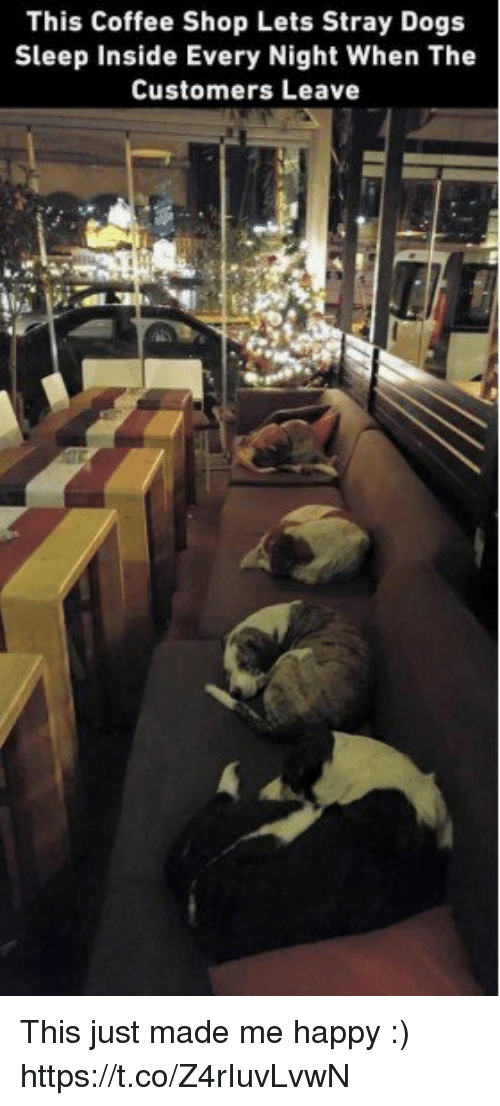 Dogs, Coffee, and Happy: This Coffee Shop Lets Stray Dogs  Sleep Inside Every Night When The  Customers Leave This just made me happy :) https://t.co/Z4rIuvLvwN