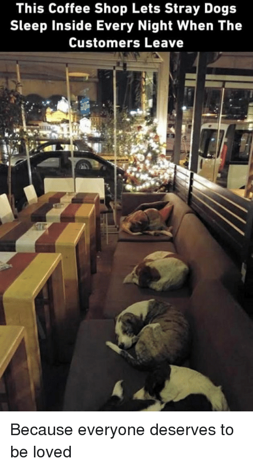 Dogs, Coffee, and Sleep: This Coffee Shop Lets Stray Dogs  Sleep Inside Every Night When The  Customers Leave <p>Because everyone deserves to be loved</p>