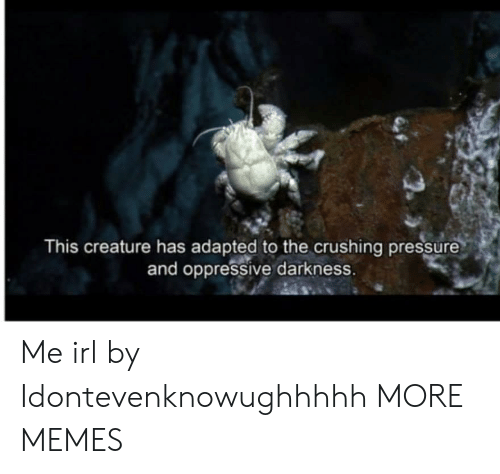 Dank, Memes, and Pressure: This creature has adapted to the crushing pressure  and oppressive darkness. Me irl by Idontevenknowughhhhh MORE MEMES