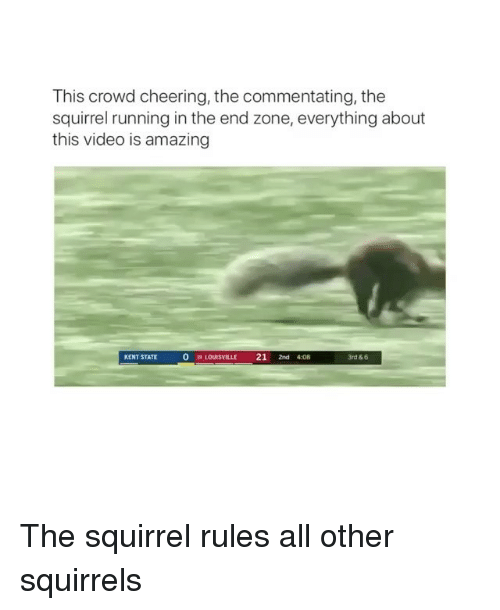 Running In The: This crowd cheering, the commentating, the  squirrel running in the end zone, everything about  this video is amazing  KENT STATE  0  19 LOUISVILLE 21 2nd 408  3rd & 6 The squirrel rules all other squirrels
