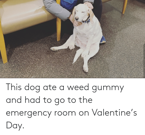 Ate: This dog ate a weed gummy and had to go to the emergency room on Valentine's Day.